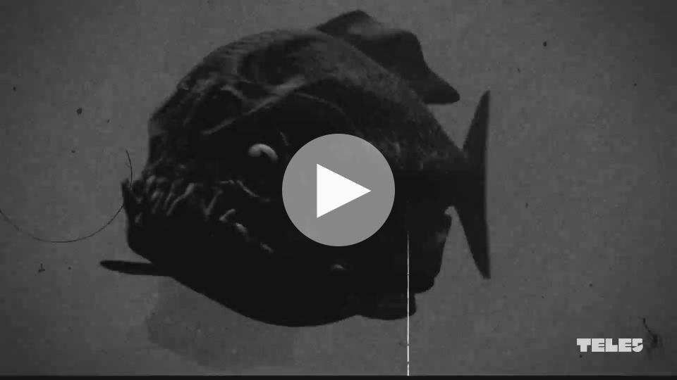 Piranha Triple - Trailer